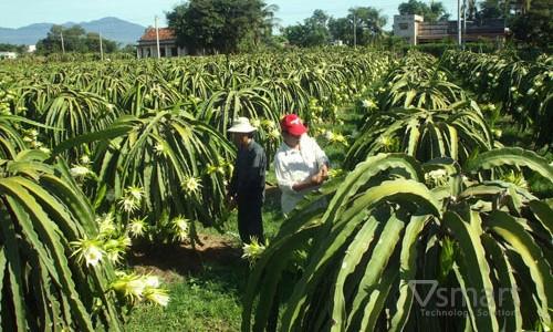 Tự động hóa nông nghiệp: Hướng đi mới của người nông dân trồng thanh long